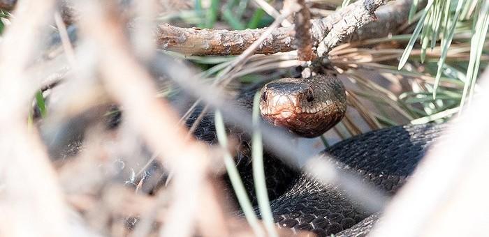 Что нужно знать об укусах змей